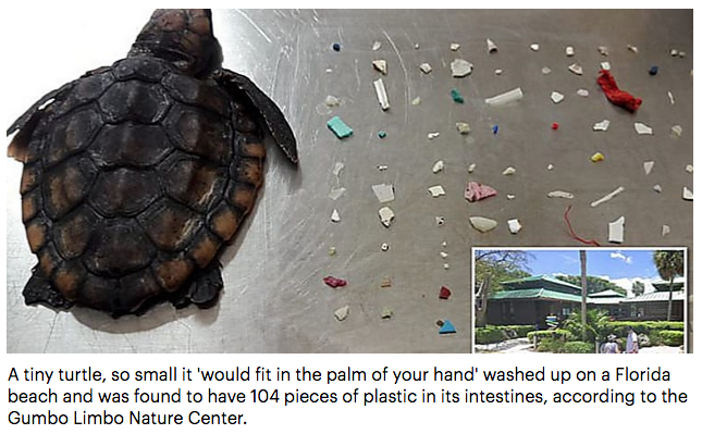 Turtle and Plastic